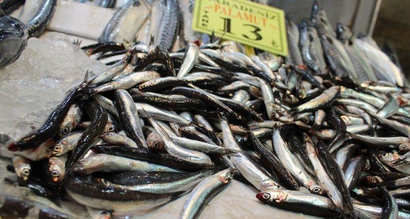 Başkent halinde yaşanan balık bolluğuna vatandaşlardan akın