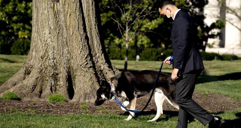 Biden'ın köpeği bir çalışanı ısırdı