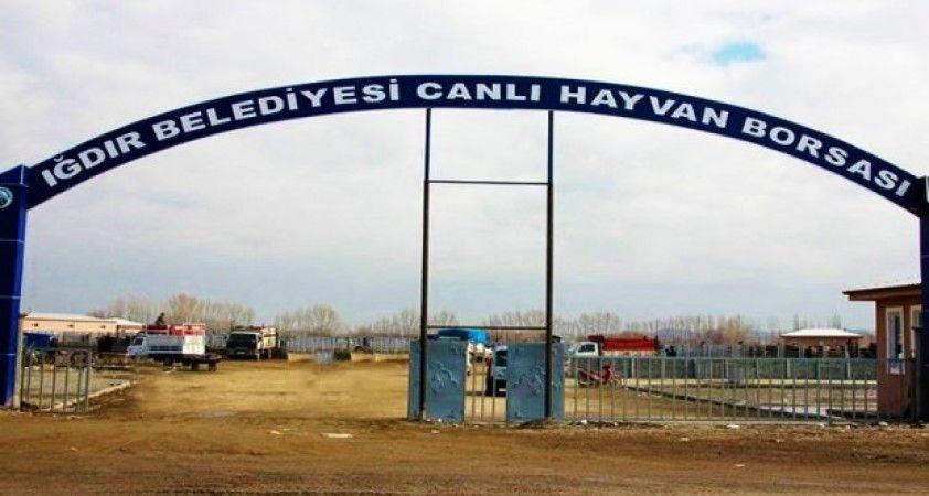 Iğdır'da Şap hastalığı paniği, 'Canlı Hayvan Borsası' kapatıldı