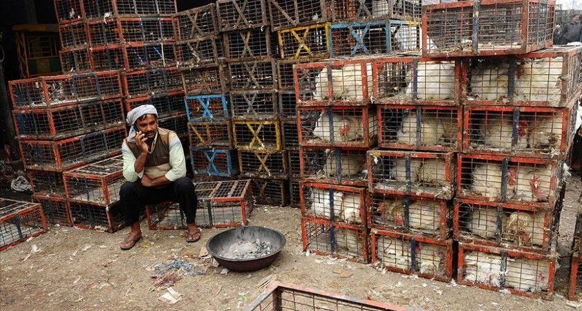 Hindistan'da Cammu Keşmir'de de olası kuş gribi salgını nedeniyle alarma geçildi