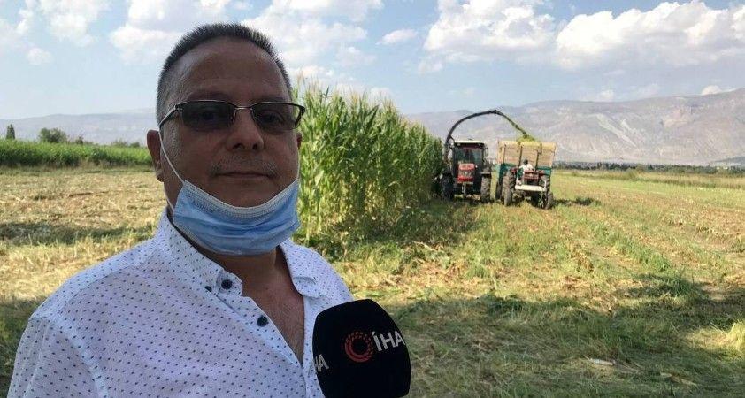 Silajlık mısır hasadı Erzincan'da başladı