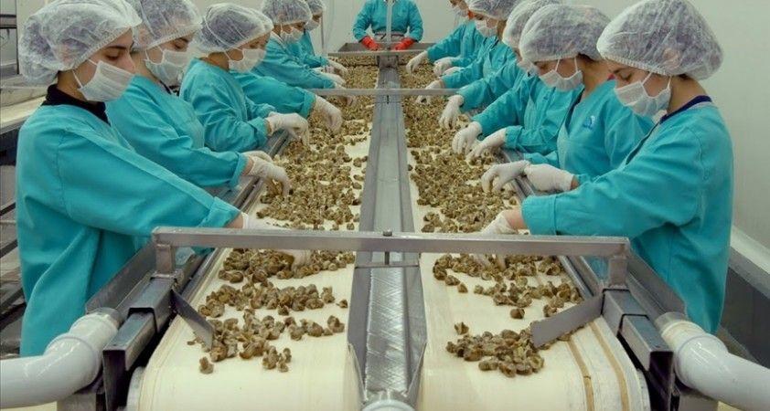 Samsun'dan yapılan hayvansal ürün ihracatı geçen yıl bir önceki yıla göre arttı