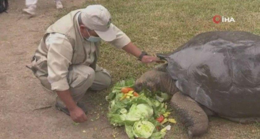 Peru'da 100 yaşını aşkın kaplumbağa ziyaretçilerin ilgi odağı oldu