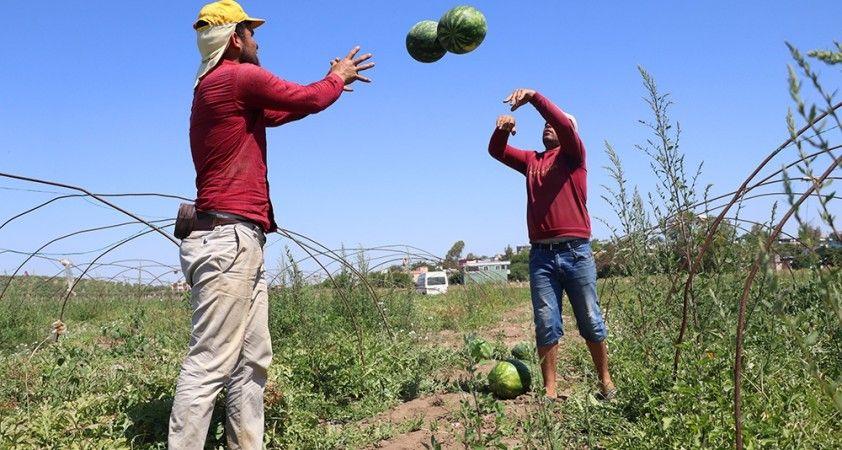 Adana'da karpuzda hasat coşkusu