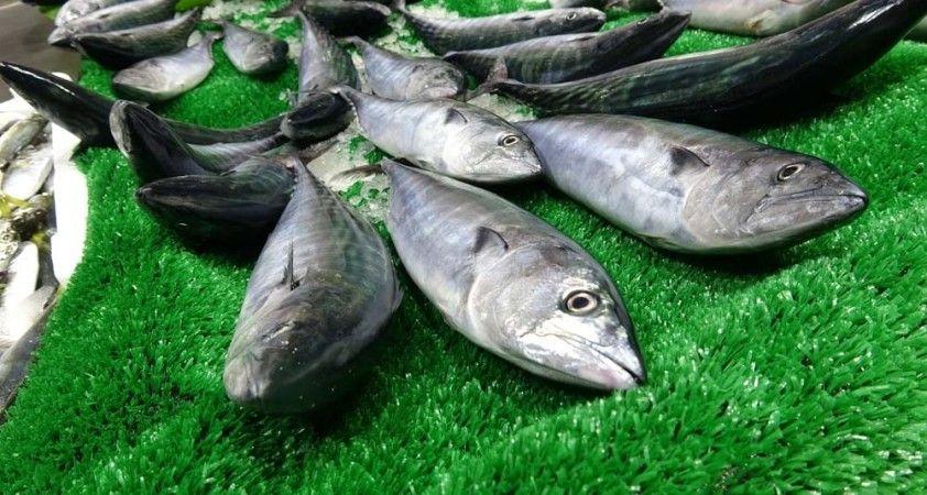 Bu balık sezonunda ilk defa yaşandı