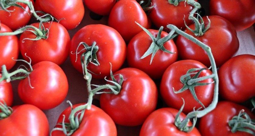 Rusya, Türkiye'den domates ithalatını arttırma kararı aldı