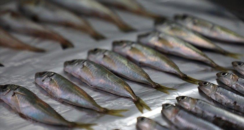 Marmara'da 12, Karadeniz'de 7 balık türünde mikroplastik tüketimi tespit edildi