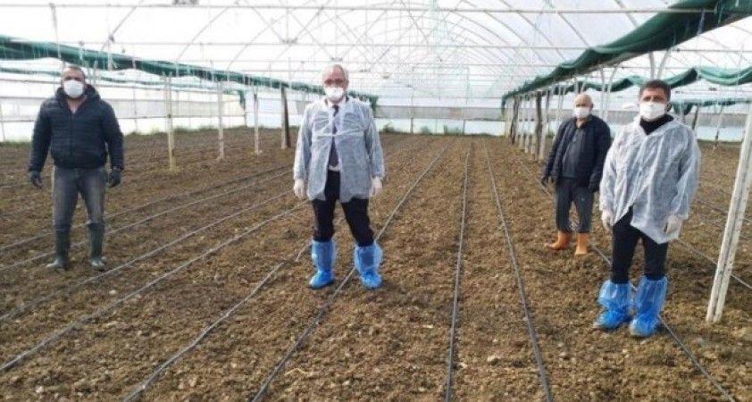 Tarım ve Orman İl Müdürü üreticileri tarlalara davet etti