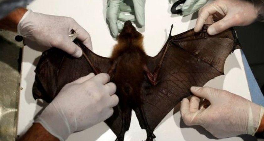 BM'den vahşi yaşamı sömürülmeye devam etmesi halinde salgın hastalıkların artacağı uyarısı