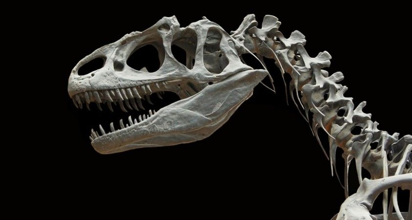 Bilinen en büyük boynuzlu dinozor 'Big John'un kalıntıları 8 milyon dolara satıldı