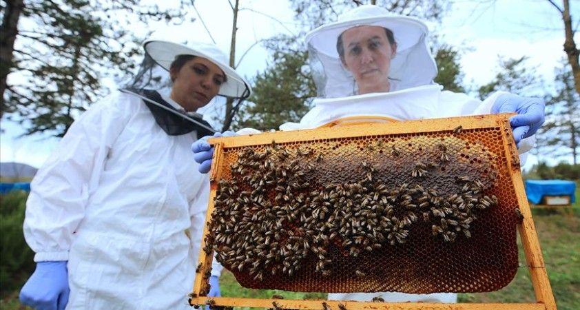 Arıcılık uzmanından iklim değişikliğinde arıları koruma önerileri