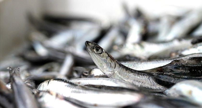 Bakan Pakdemirli: Hamside av yasağı süresi 10 gün daha uzayabilir