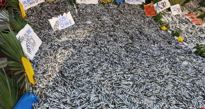 Bu sene balığa doyacağız, hamsi 15 liradan tezgâhları süslüyor