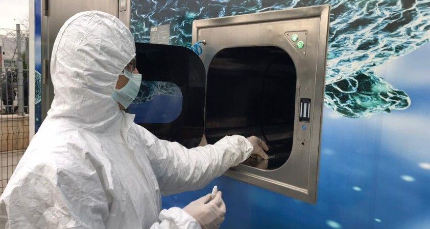 Korona virüse karşı yerli ve milli taşınabilir laboratuvar