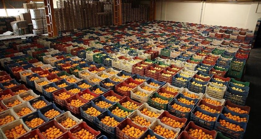 Türkiye'nin 2020'de yaş meyve sebze ihracatına 5 ürün 'damga vurdu'