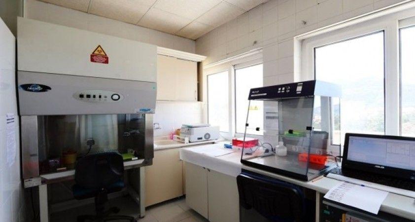 Amasya'da korona testleri yapılmaya başlandı