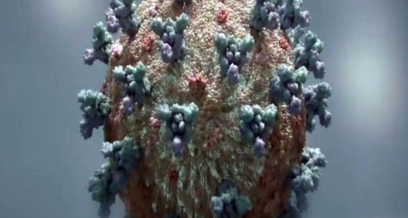 Korona virüs Antarktika kıtasına da sıçradı