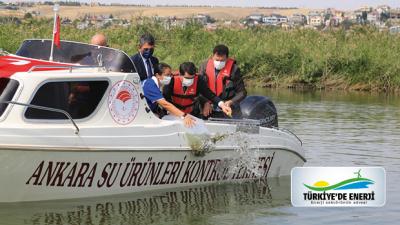 'İç Suları Balıklandırıyoruz' Projesi Mogan Gölü'nde 100 Bin Sazan